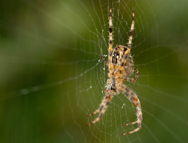 Primer plano de una araña en una telaraña