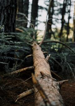 Primer plano de un árbol caído en el bosque