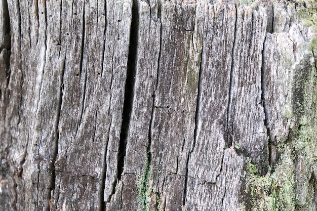 Primer plano de árbol viejo, fondo de madera