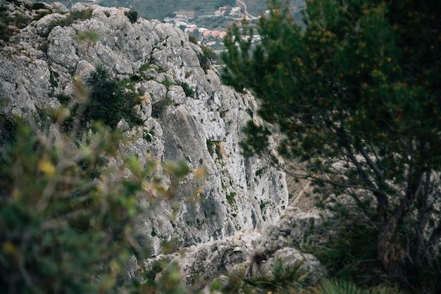 Primer plano de árboles con montañas rocosas