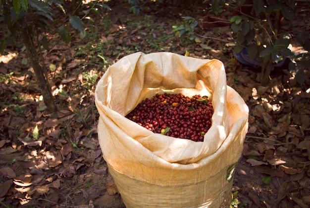 Primer plano de una bolsa marrón con granos de café rojos en él