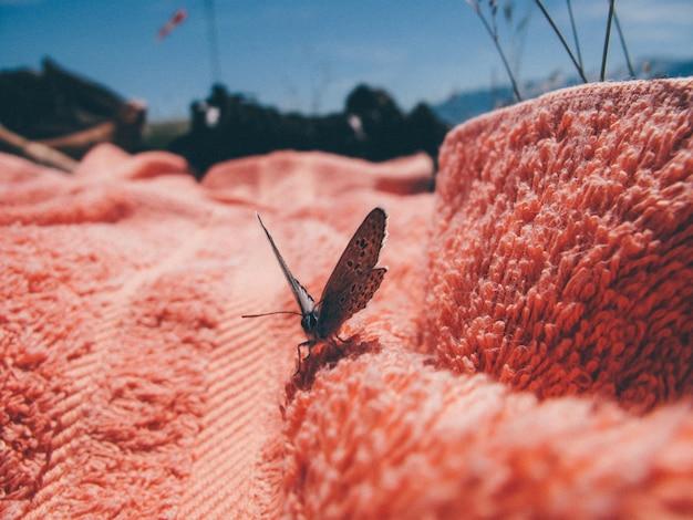 Primer plano de un buterfly en una toalla rosa en un día soleado