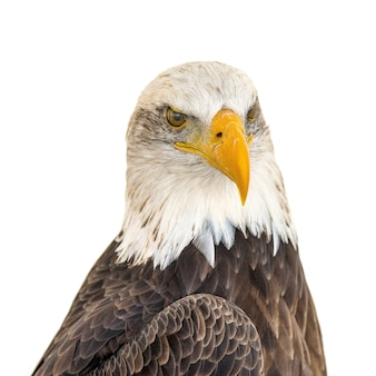 Primer plano de la cabeza de un águila majestuosa