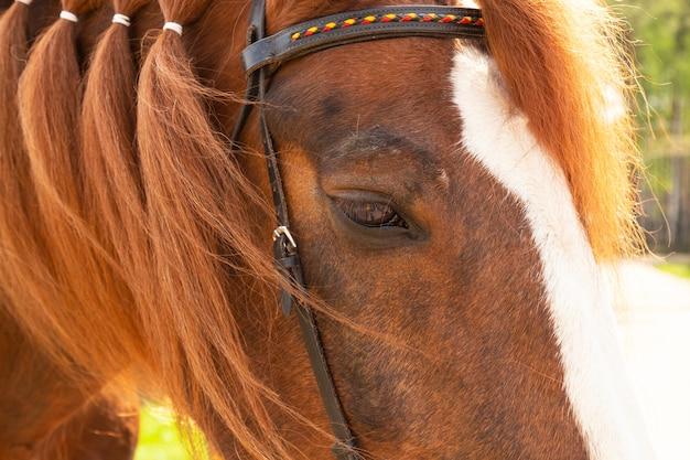 Primer plano de la cabeza del caballo. ojo y crin de caballo