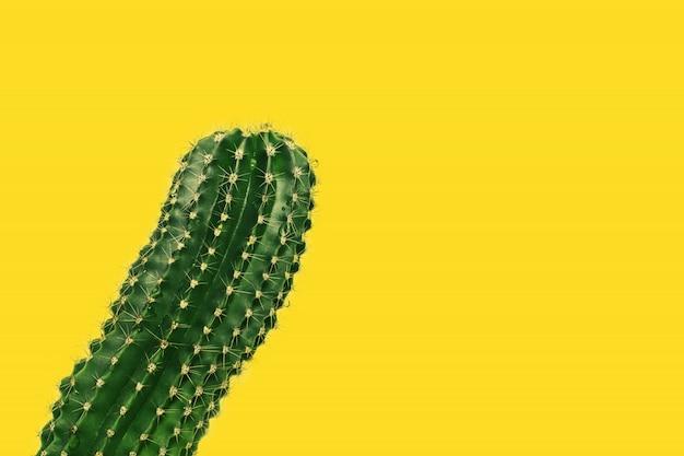 Primer plano de cactus de espina en amarillo