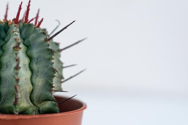 Primer plano de un cactus en un macetero marrón capturado sobre un fondo blanco.