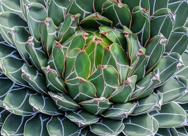 Un primer plano del cactus