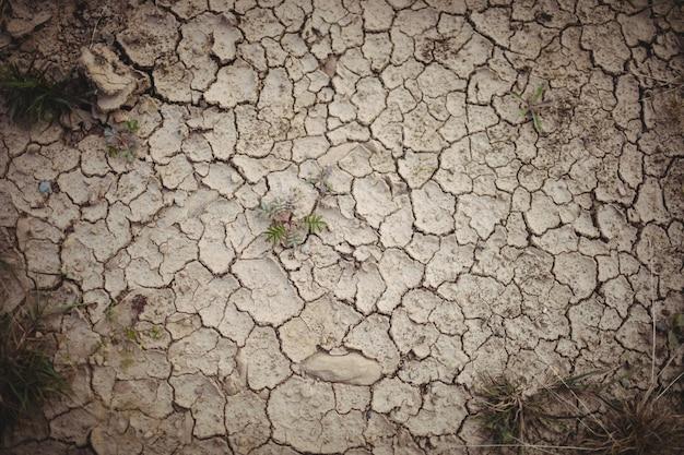 Primer plano de campo seco