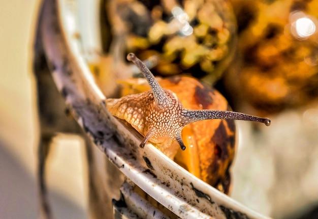 Primer plano de un caracol sobre un fondo borroso en las islas canarias