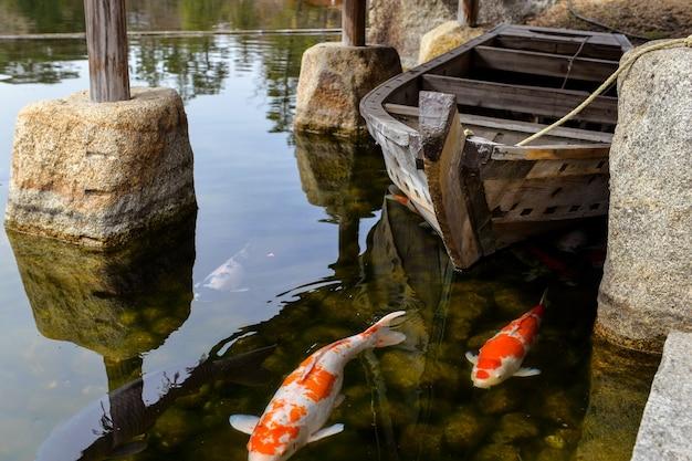 Primer plano de carpas en el estanque