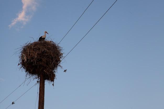 Primer plano de cigüeñas blancas bajo el cielo pacífico