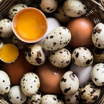 Primer plano de codornices y huevos de gallina