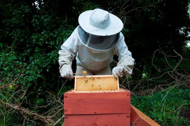 Un primer plano de una colmena de abejas