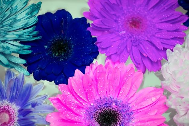 Primer plano de coloridas flores en el filtro negativo flotando en el agua