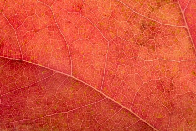 Primer plano colorido concepto de hoja de otoño
