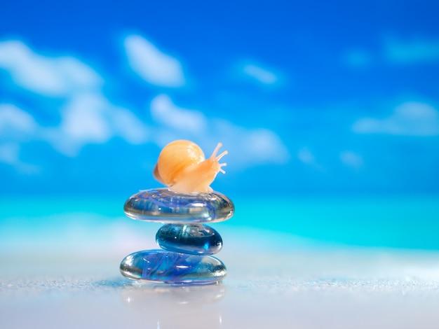 Primer plano de concha de mar en la playa. pila de piedras de cantos rodados y plumeria en la playa sobre una superficie de madera. concepto zen, spa, verano, playa, mar.