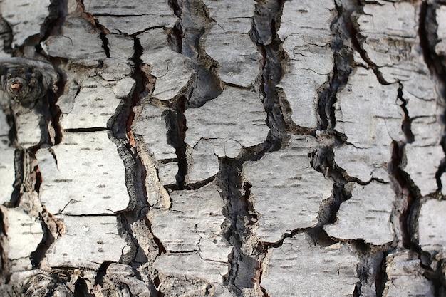 Primer plano de corteza de árbol, árbol viejo. fondo natural