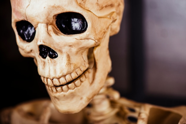 Primer plano del cráneo decorativo
