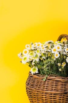 Primer plano de cesta de flores de chamomiles sobre fondo amarillo