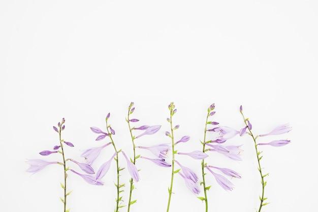 Primer plano de flores de color púrpura sobre fondo blanco