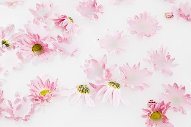 Primer plano de hermosas flores rosadas flotando en el agua