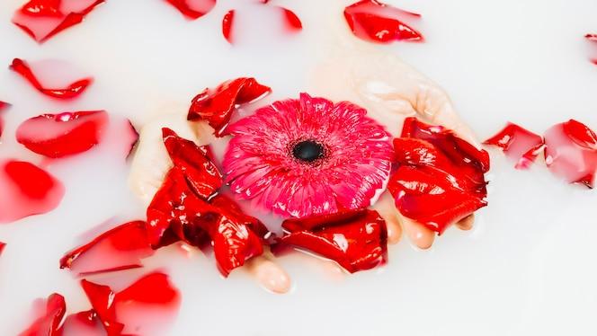 Primer plano de la mano de una persona con flor roja y pétalos en agua clara