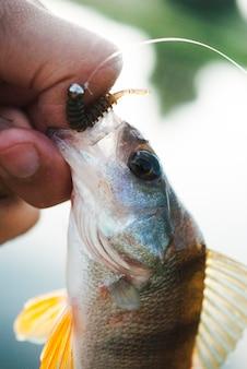 Primer plano de la mano que sostiene el pescado capturado con cebo de pesca