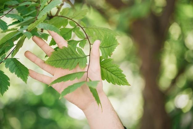Primer plano de mano tocando la ramita de la planta