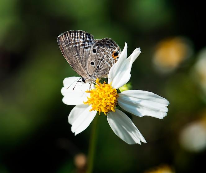 Primer plano de mariposa en la naturaleza