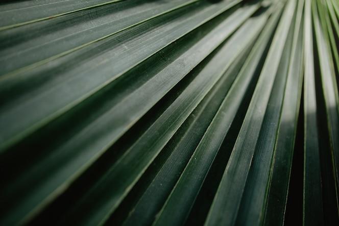 Primer plano de plantas tropicales verdes