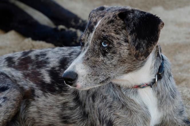 Primer plano de un perro, sayulita, nayarit, méxico
