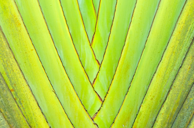 Primer plano de una textura de árbol de palma