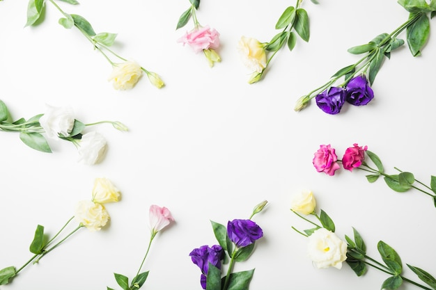 Primer plano de diferentes tipos de flores sobre fondo blanco