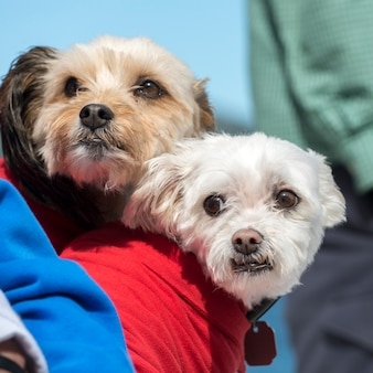 Primer plano de dos perros lindos, norris point, gros morne national park, terranova y labrador, canadá
