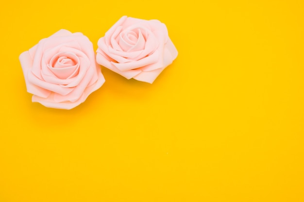 Primer plano de dos rosas rosadas aisladas sobre un fondo amarillo con espacio de copia