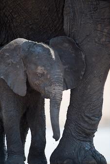 Primer plano de un elefante bebé de pie junto a una madre elefante