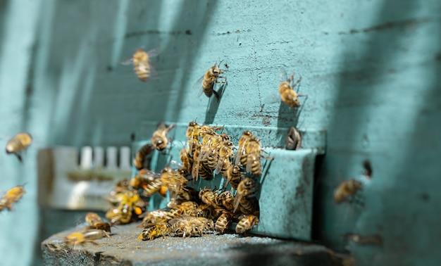 Primer plano de un enjambre de abejas en una colmena de madera en un colmenar.