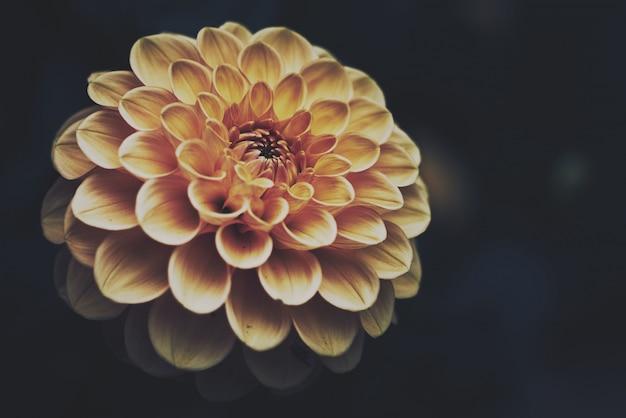 Primer plano de una exótica flor de naranja en la oscuridad