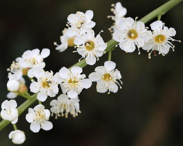 Primer plano de una flor de baya amarga en un campo bajo la luz del sol