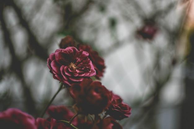 Primer plano de una flor morada con natural borrosa