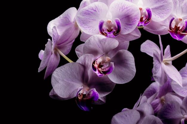 Primer plano de una flor de orquídea sobre un fondo negro