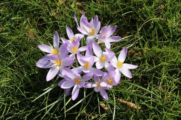 Primer plano de la flor púrpura en el campo en un día soleado