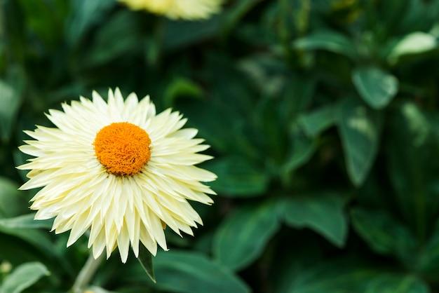 Primer plano de la flor