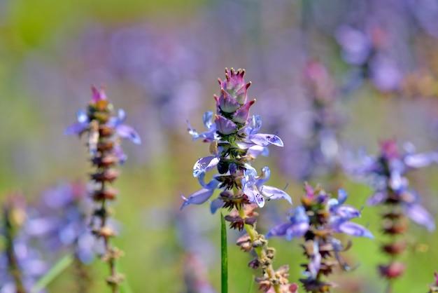 Primer plano de flores azules