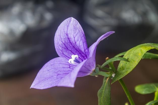 Primer plano de flores de color púrpura