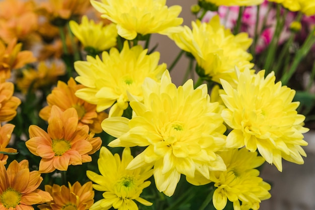 Primer plano de flores de crisantemos amarillos