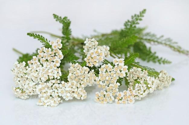 Primer plano de flores de milenrama