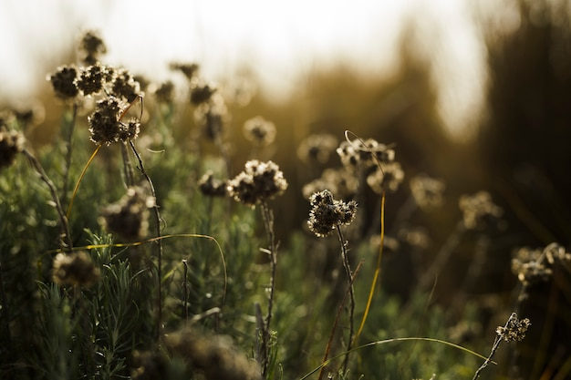 Primer plano de flores muertas