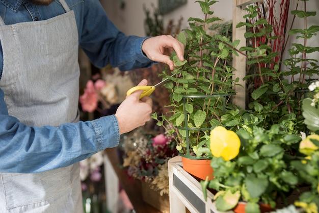 Primer plano de floristería masculina cortando las hojas de la planta con tijera