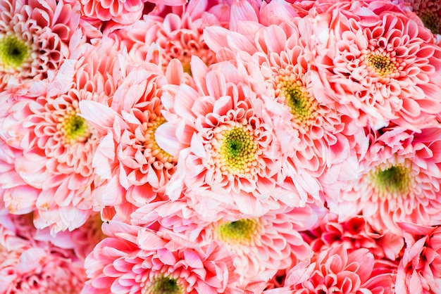 Primer plano de fondo con textura de crisantemo